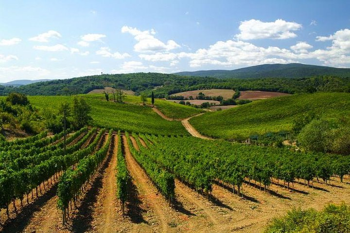 Small-Group Tour: Chianti Winery, Chianti Classico and Greve in Chianti