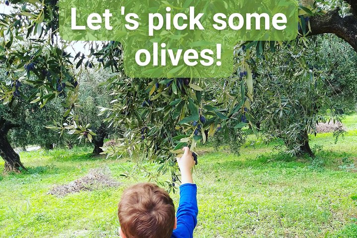 Olive oil tasting & mini lunch in Messinia, Greece!