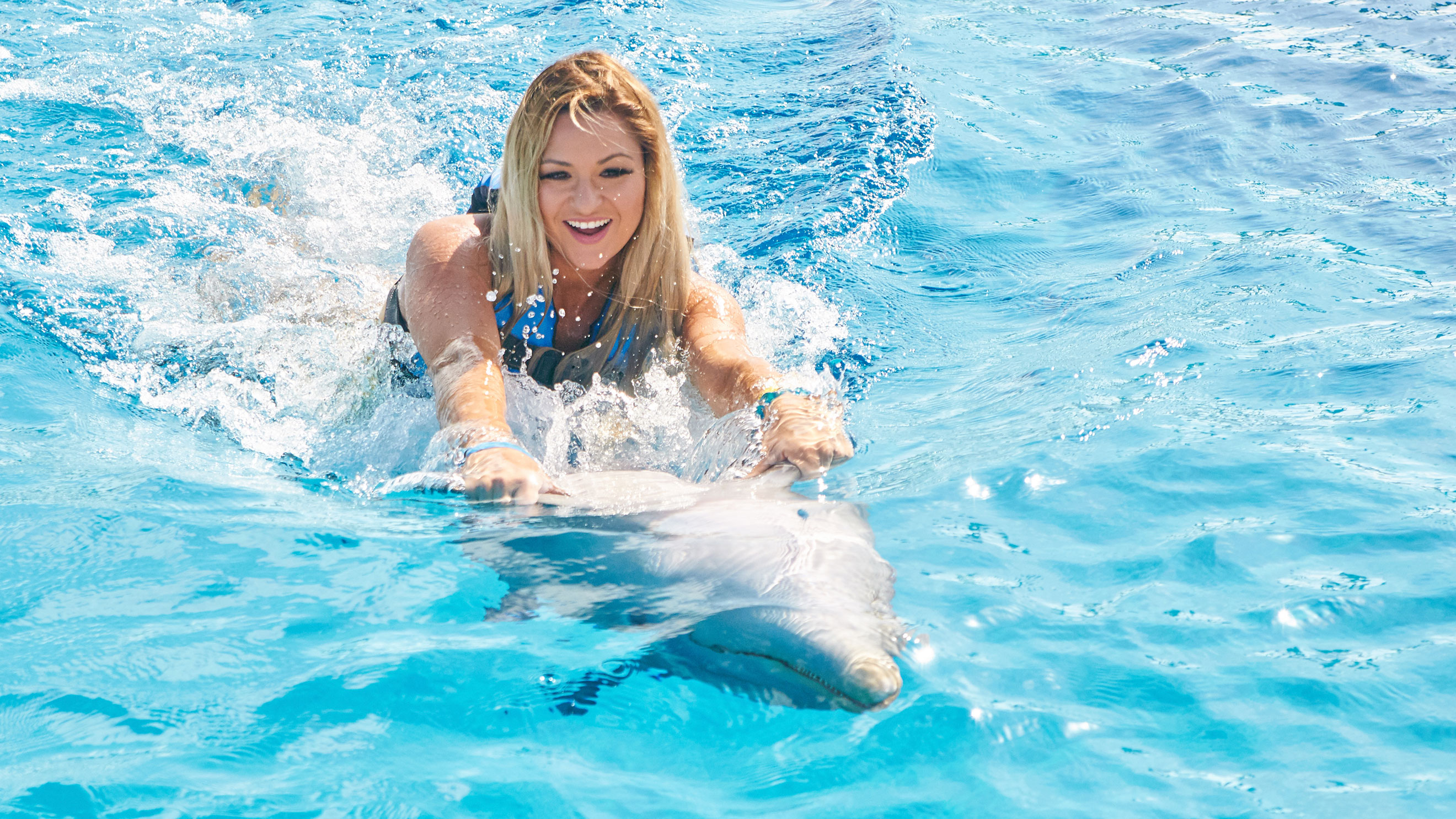 Play with the cutest dolphins
