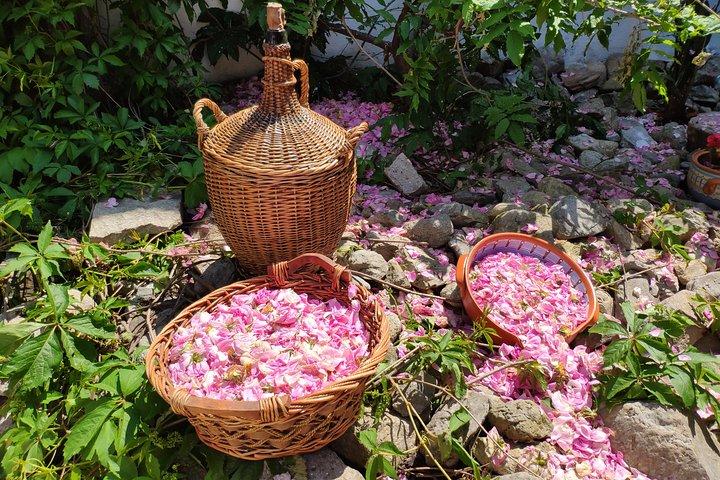 Pick Kazanlak roses on your own