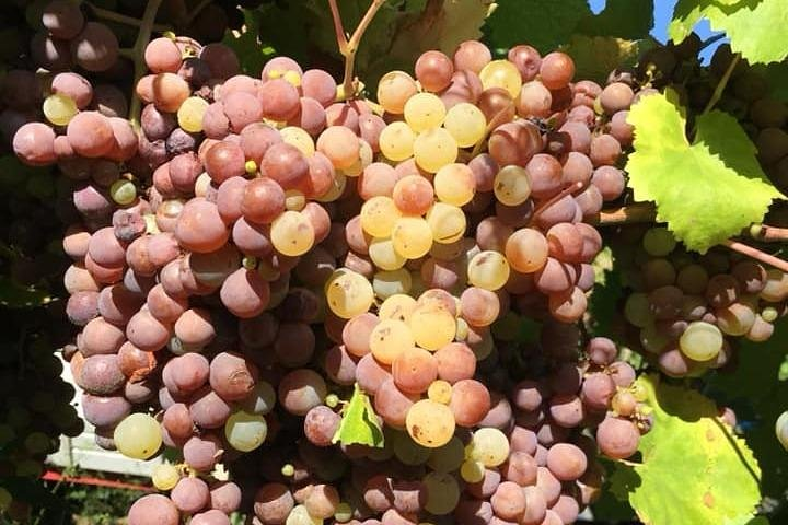 Castelli Romani: Wine tasting in Frascati from Rome