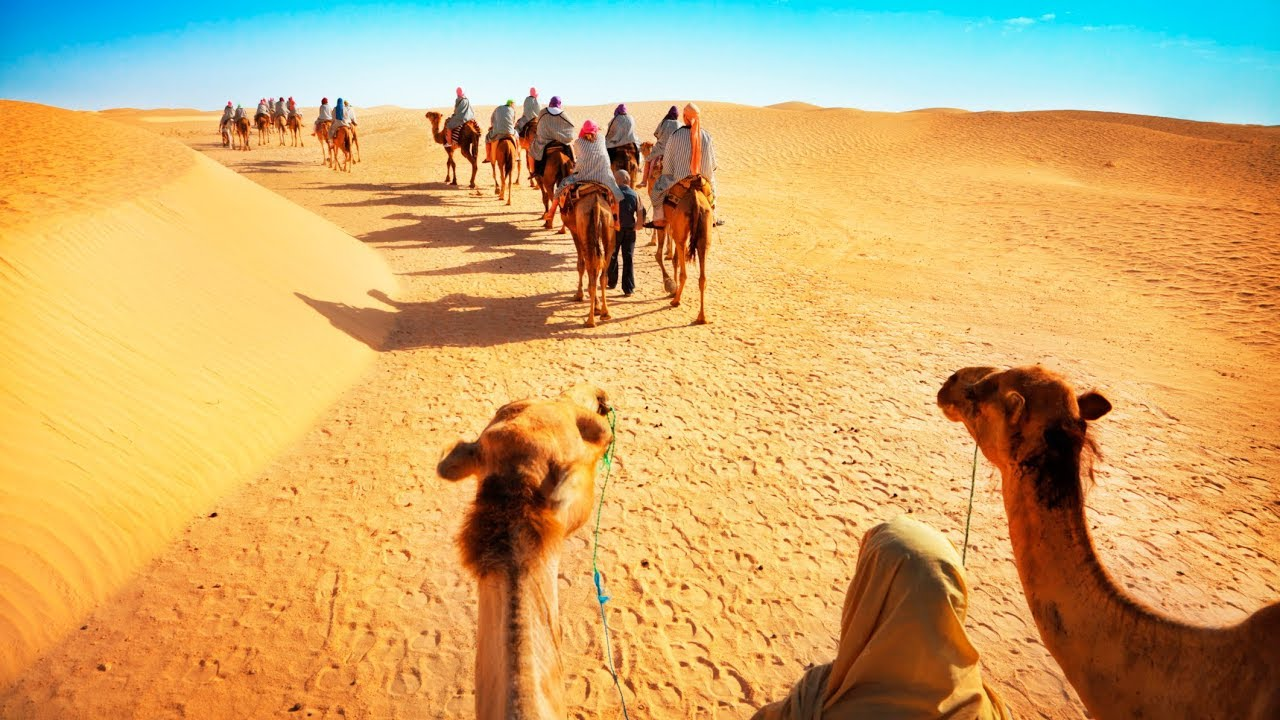 Enjoy camel safari