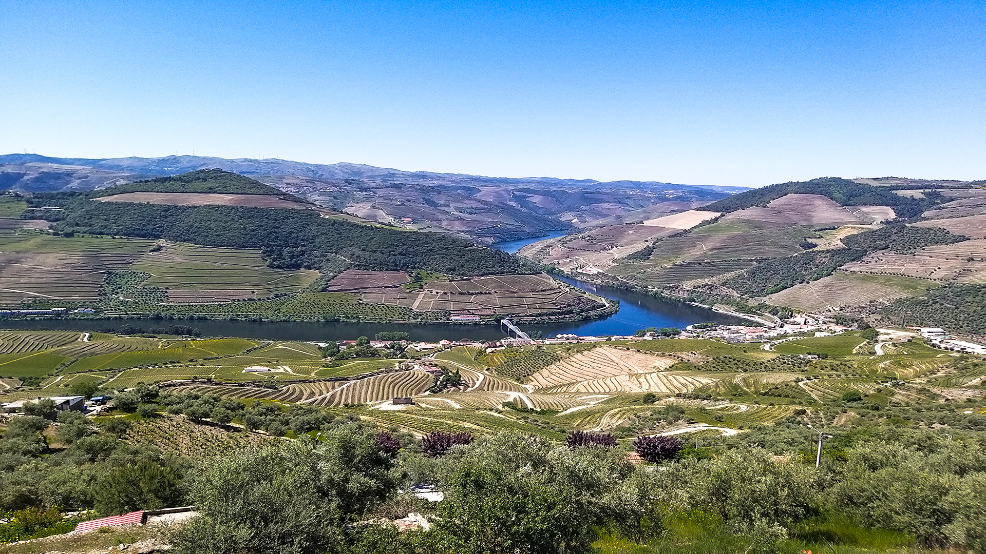 Douro Valley Private Wine Tour - Gourmet Lunch & 2 Wineries Tastings