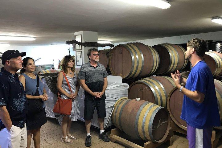 Bolgheri Wine Tour
