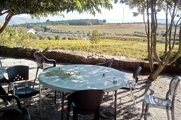 WINE SAFARI at Douro Valley w/picnic, Winery visit and tasting