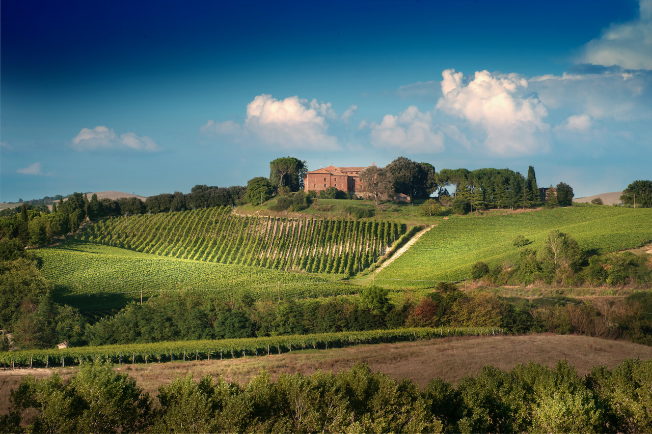 Montalcino: Brunello Wine Tasting Experience