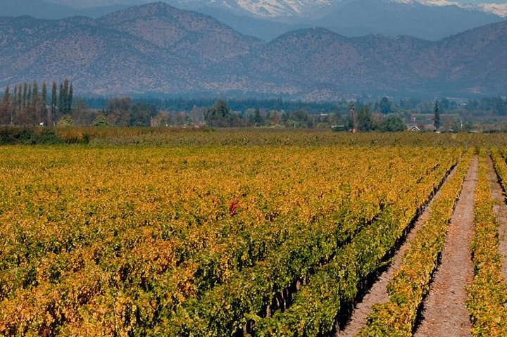 Half Day Trip to Cousiño Macul Vineyard from Santiago - Wine Tasting Included