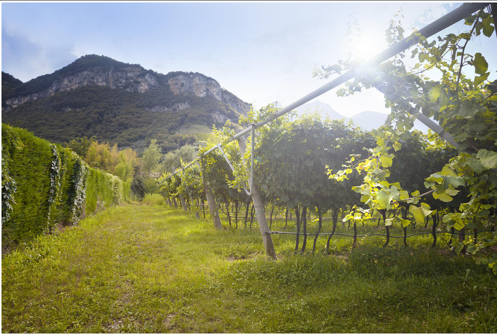 Discovery tour of the prosecco region with tastings from Venice