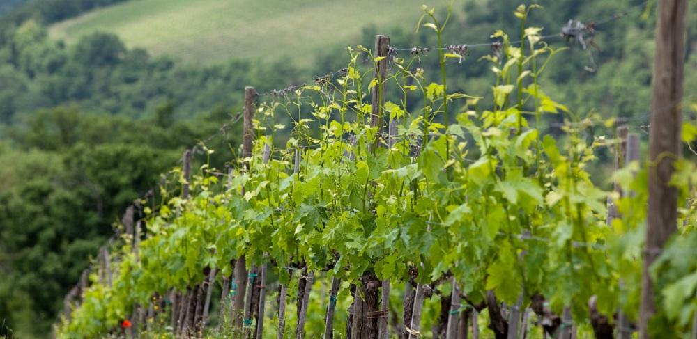 Chianti & Vernaccia wine tour from Siena