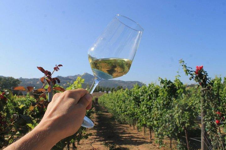 Granite & Wine Of Gallura (North East Sardinia)