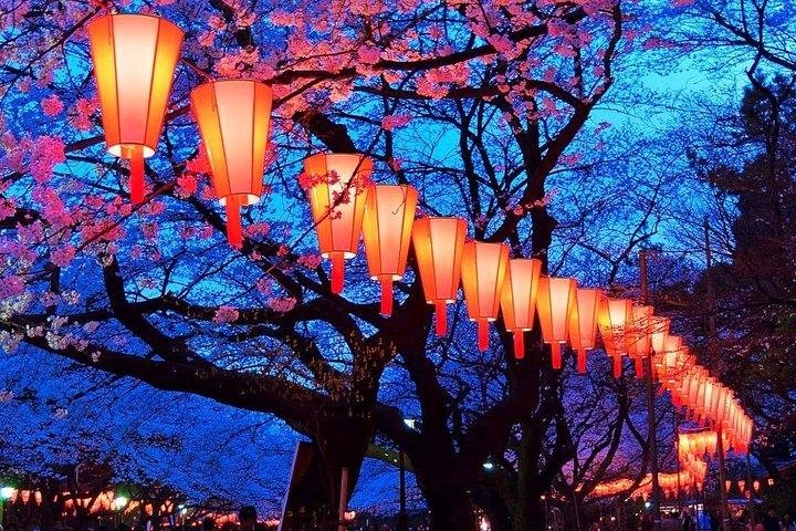 Cherish cherry blossoms
