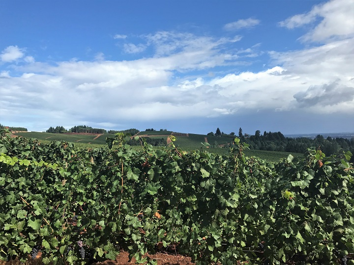 Eugene Willamette Valley Wine Tasting Tour