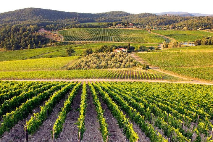 Tuscany Highlits: Day Trip San Gimignano, Pisa, Siena, Chianti Winery
