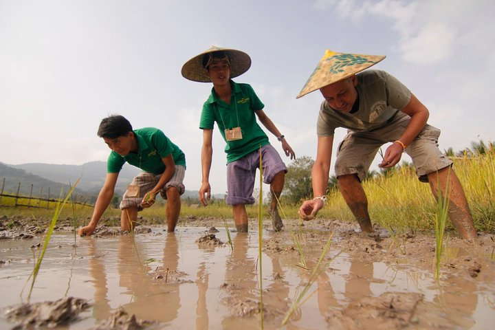 Rice Cultivation and Kuang Si Waterfall from Luang Prabang Full-Day