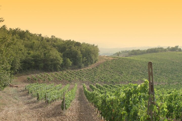 Exclusive Chianti Tour with Luxury Wineries and Lunch
