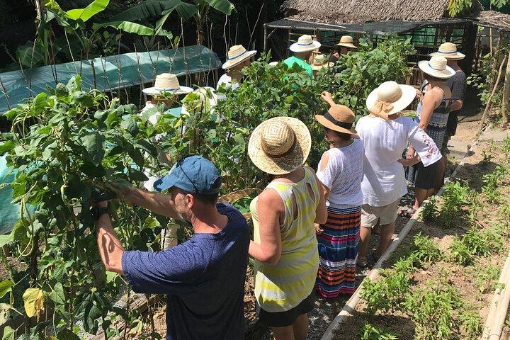 Organic Micro Farm and Thai Cooking Class in Koh Samui
