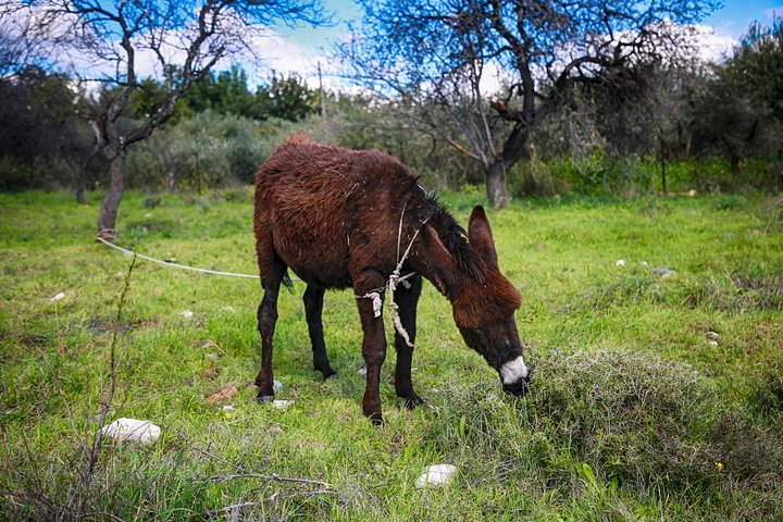 Apesia Hills Donkey Riding Park