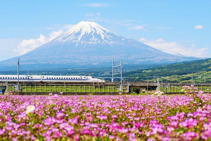 Bullet Train and Mt. Fuji Famous Food Tour