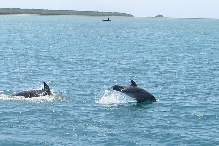 Be on the look out for dolphins