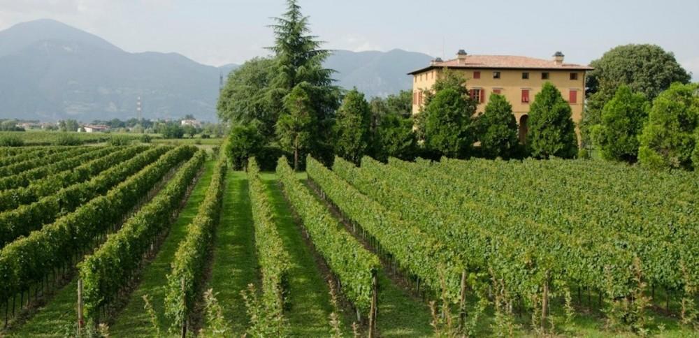 Franciacorta & Milan full immersion wine tour