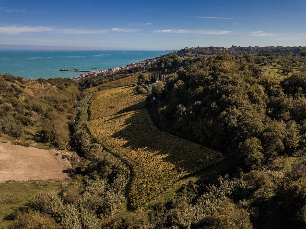 Visit and tasting of Abruzzo wines at Olivastri Tommaso winery