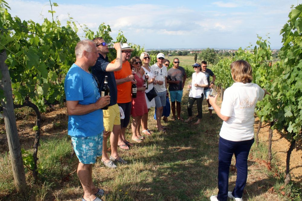 Organic Wine Tour at Poggio Al Casone