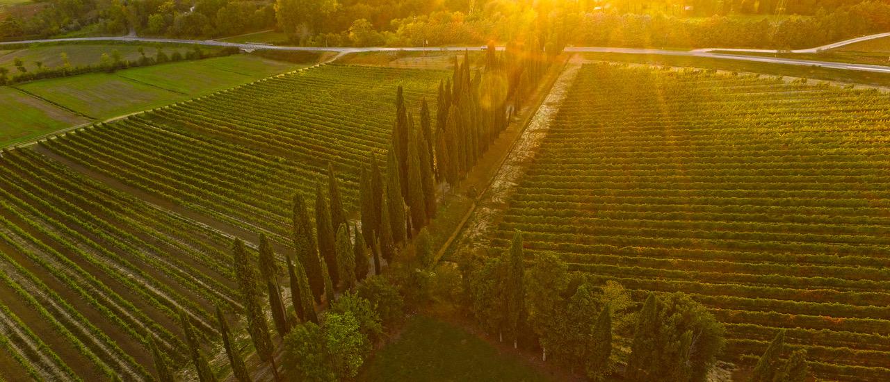Arezzo: Wine Tasting Experience in Val di Chiana