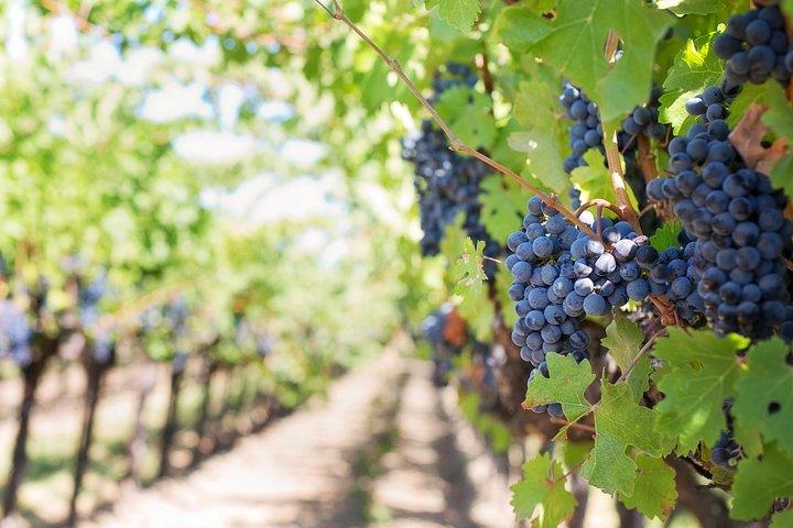 Mount Vesuvius Wine Tour Experience