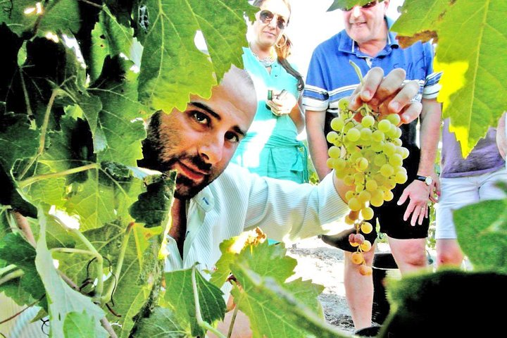 Full Day Sherry Wine Private Experience from Malaga