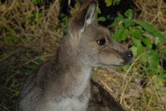 Meet wild kangaroos