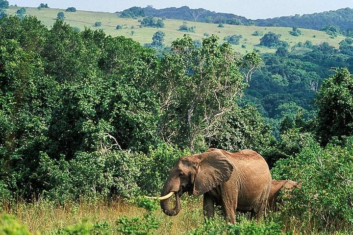 Spot elephants on this amazing tour
