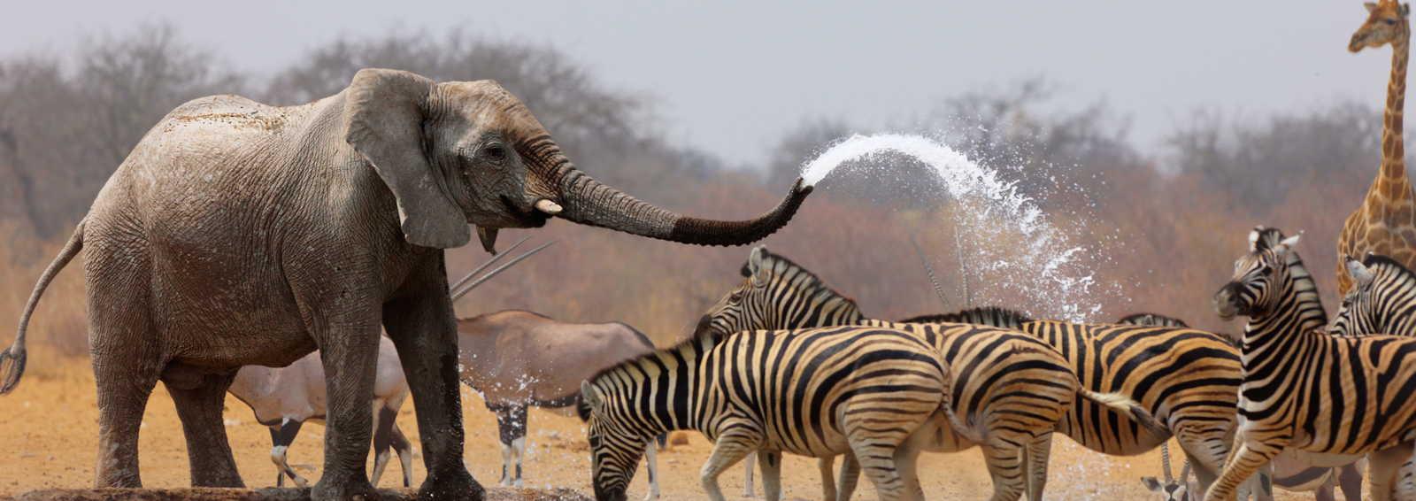 Elephant splashing water around
