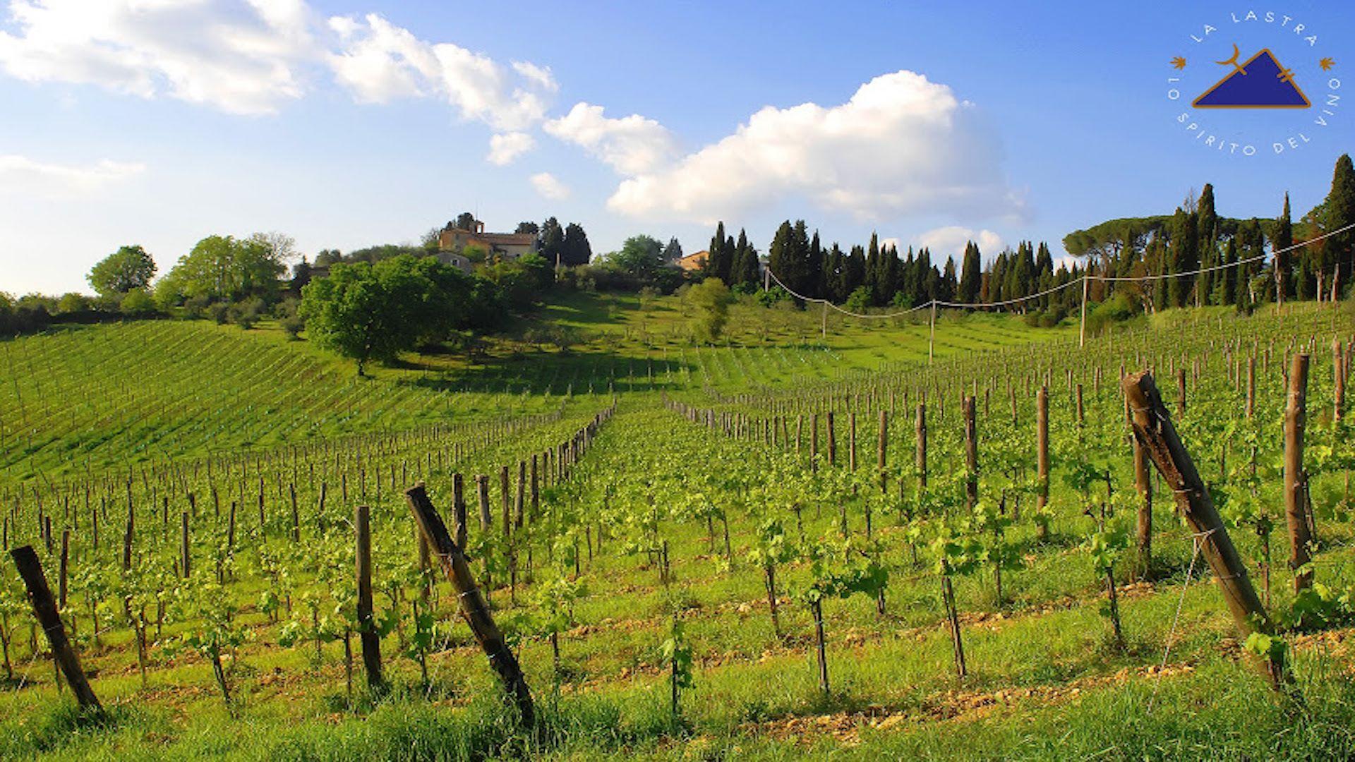 San Gimignano Vernaccia guided half wine day tour from Siena