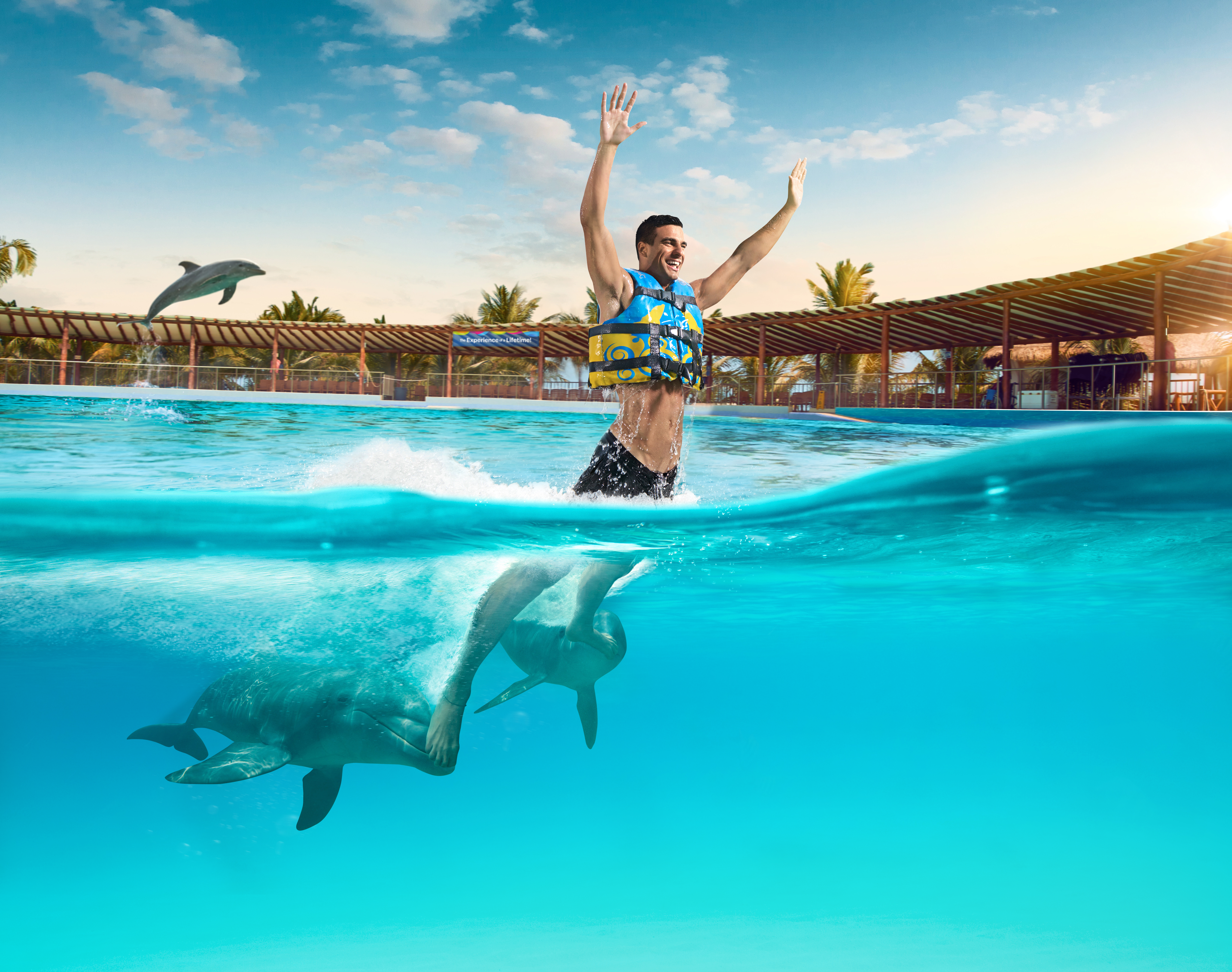 Enjoy with the dolphins