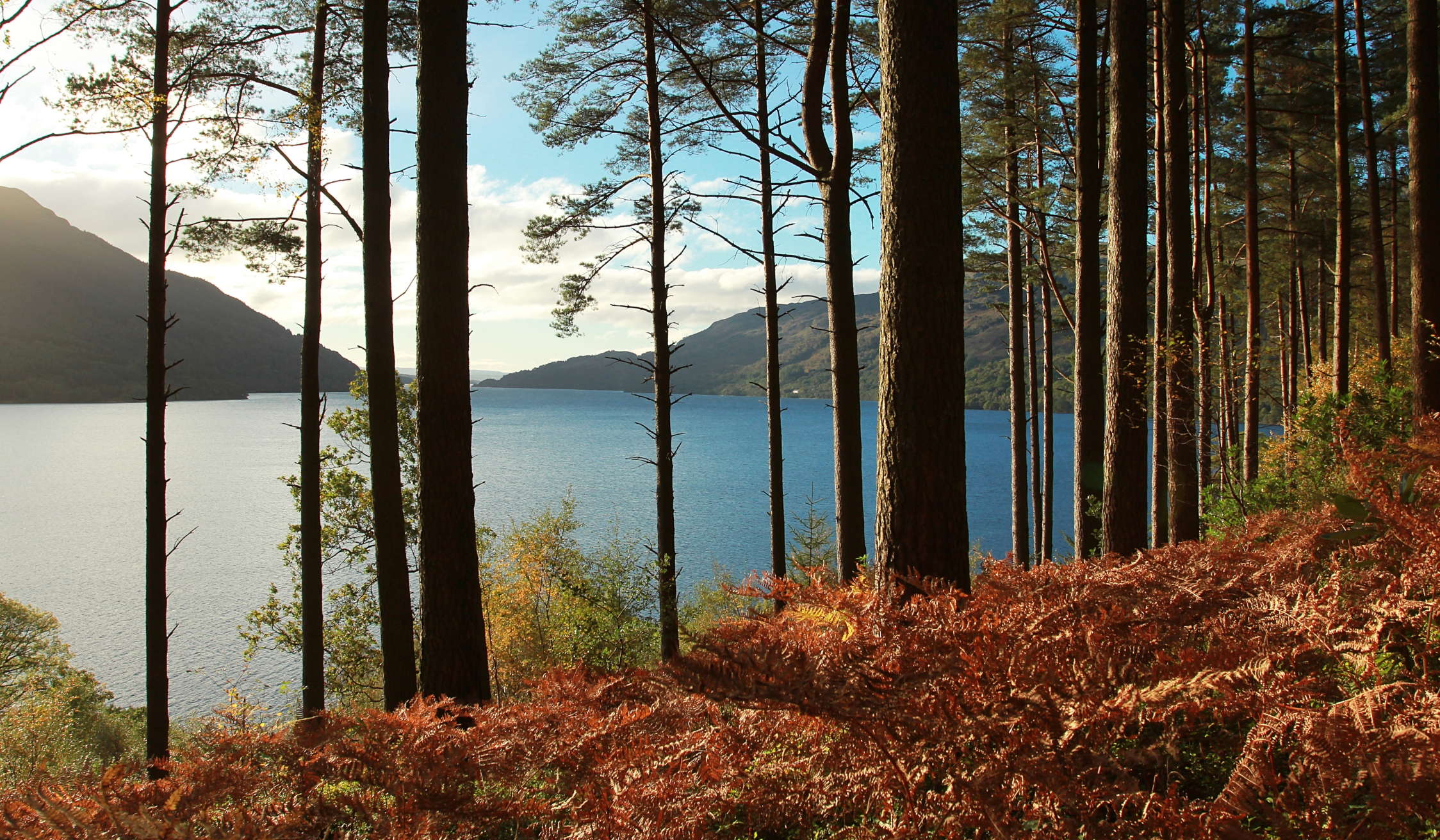 Loch Lomond, Cruise & Whisky Small-Group Day Tour from Glasgow