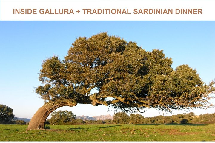 Gallura Tour + Traditional Sardinian Dinner (Or Lunch)