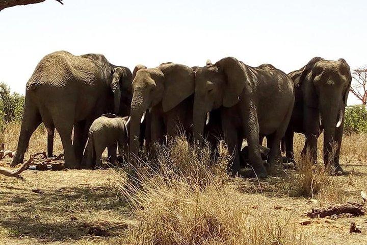 Befriend elephants on this safari