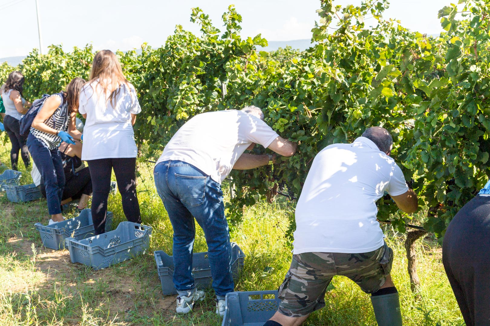 Harvesting and Winemaking Tour