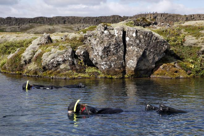 Snorkeling Silfra & Whale Watching