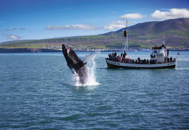 Húsavík Original Whale Watching Tour