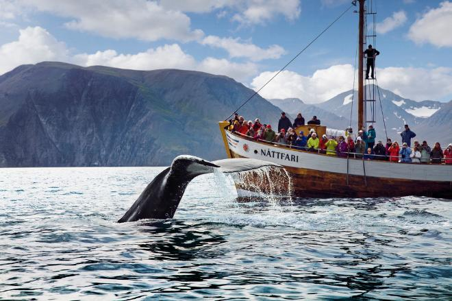 Original Whale Watching - From Húsavík