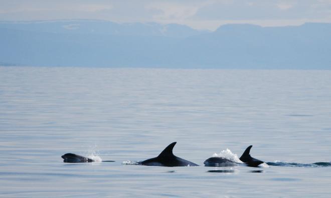 Reykjavík Classic Whale Watching