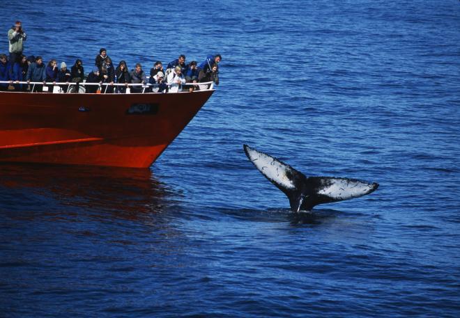 Rafting & Whale Watching-Hvítá